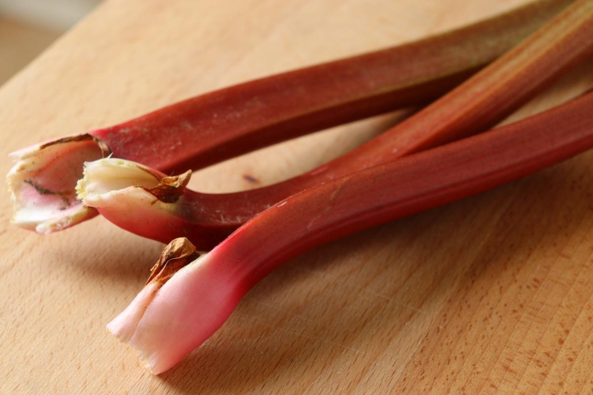 Red rhubarb stalks freshly harvested from the garden